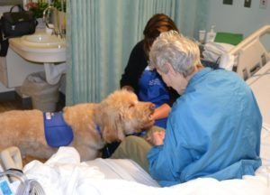 Therapy dog visiting patient in hospital bed